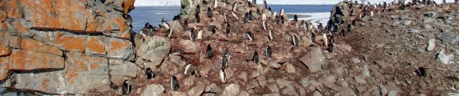 Antarctica op Google Maps